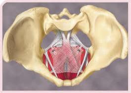 anterior-vaginal-mesh